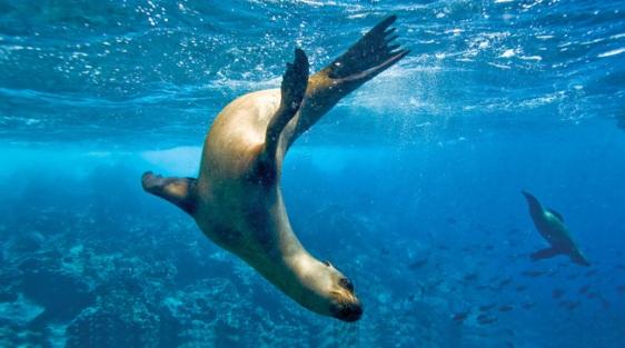 Discover the Magic of the Galápagos